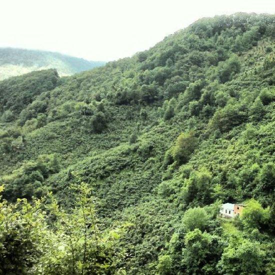 Trabzon Beşikdüzü  Dagmahalle Köy forest village house turkey turkei blacksea green