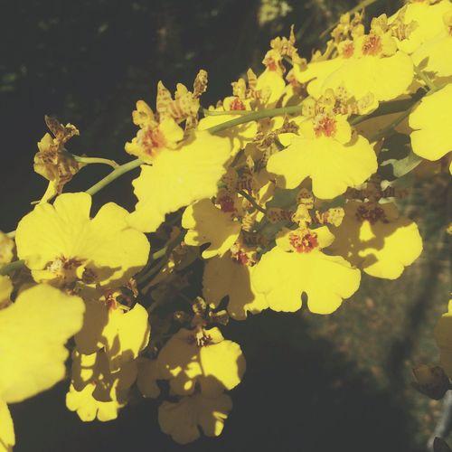 Yellowjackets Flower. 💛🌼