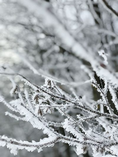 Cold Temperature Winter Snow Nature Weather Frozen Close-up Backgrounds Branch Beauty In Nature Frost