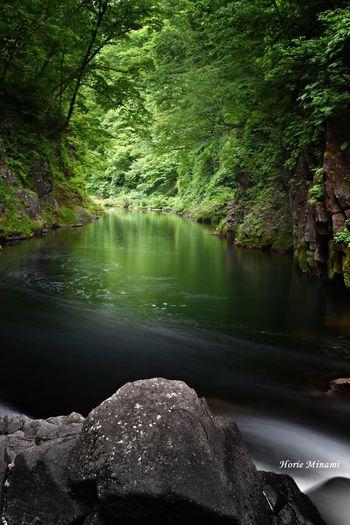 秋保大滝 Long Exposure EyeEmNewHere EyeEm Gallery EyeEm Selects EyeEm Best Shots Water Tree Beauty In Nature Plant Nature Tranquility No People