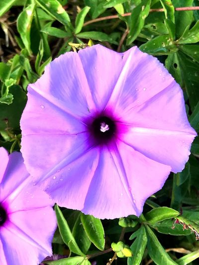 Flower Beauty In Nature Purple