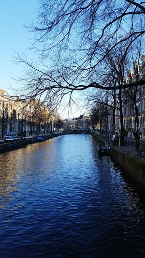 Amsterdam Dec 2016 Tree Water Reflection Nature Beauty In Nature Day No People Scenics