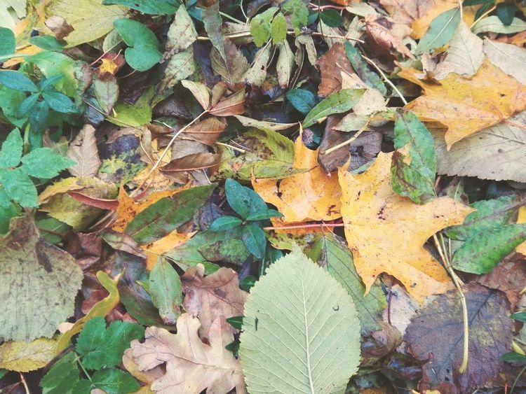 Backgrounds Autumn Nature Ternopil Ukraine Autumn 2016 AutomAutumn October Automne🍁🍂🍃 Autumn Colors Autumn🍁🍁🍁 Nature Beauty In Nature Background Back Hojas De Otoño Hojas Secas Otoño 🍁 Otoño Otoño Hojas Otoño2016