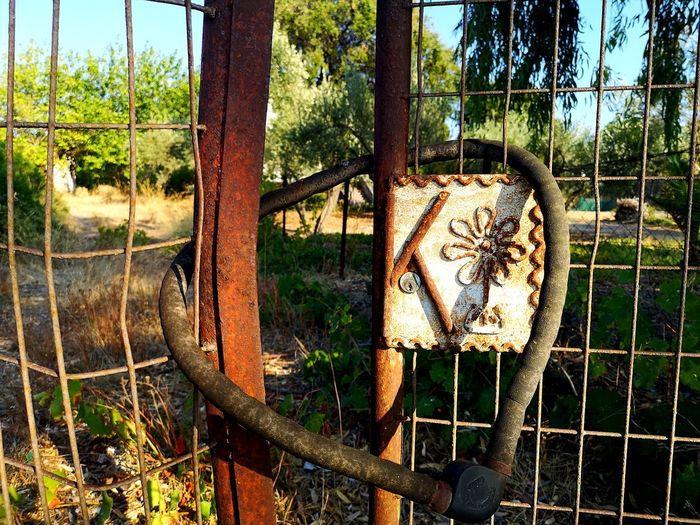 Tree Oil Pump