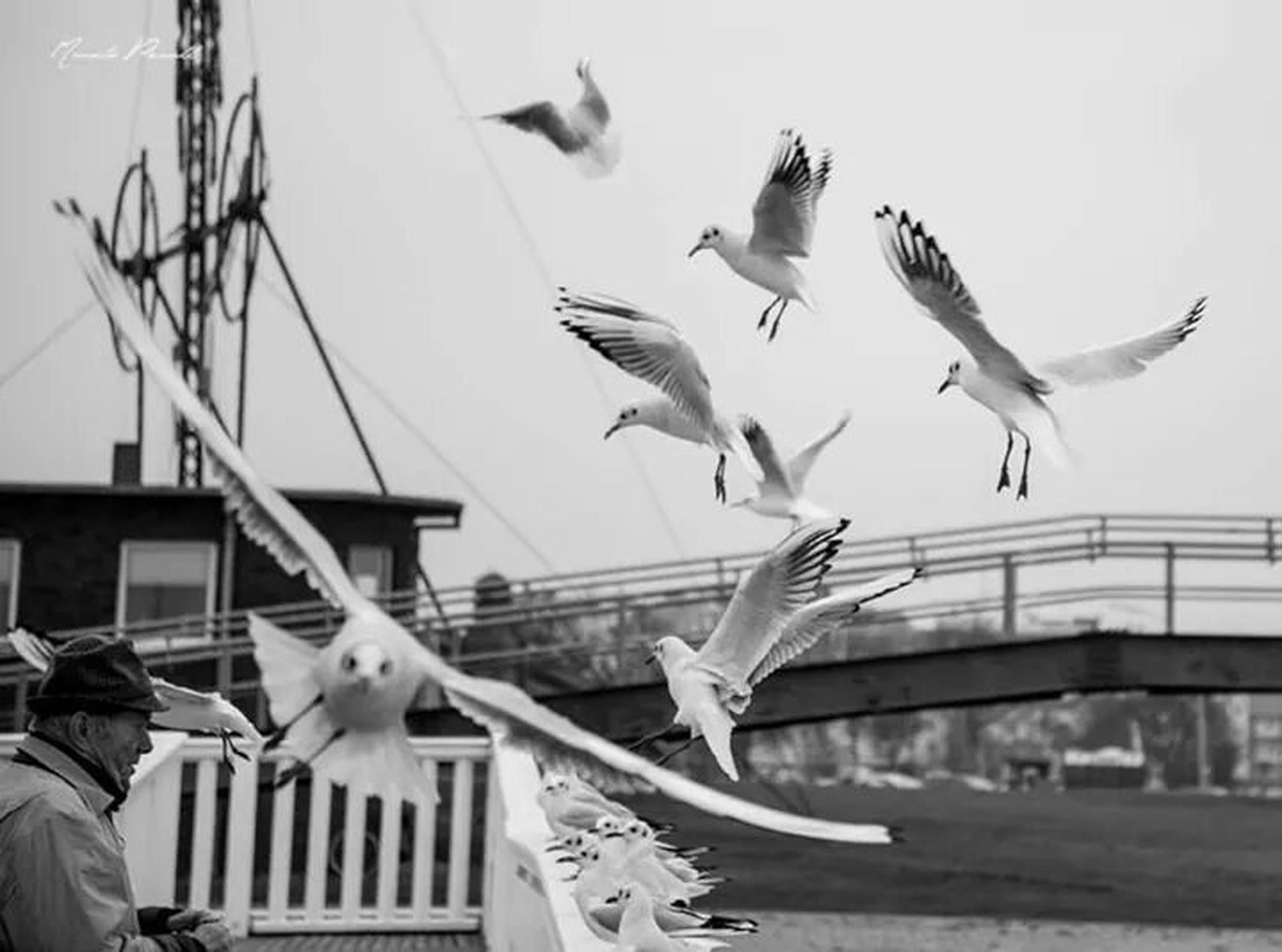bird, animal themes, animals in the wild, flying, wildlife, spread wings, seagull, low angle view, mid-air, perching, flock of birds, medium group of animals, sky, built structure, architecture, two animals, three animals, building exterior, one animal