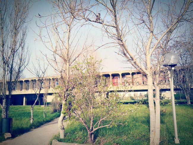 University Usthb Beuty Of Nature Beutiful Day Getting Inspired Bab Ezzouar Algiers Algeria