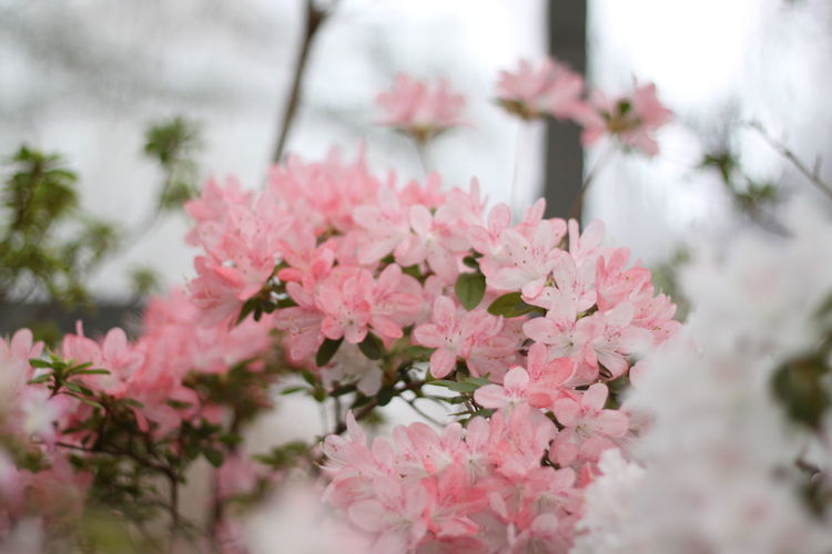 Beauty In Nature Close-up Color Flower Freshness Growth Nature No People