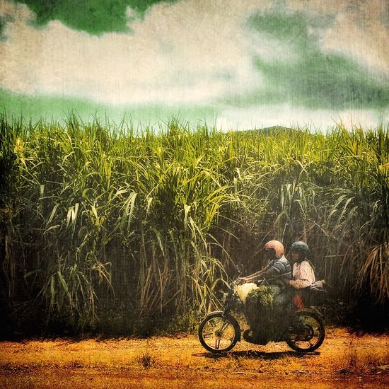 Along the sugarcane Streetphoto_color Travel Photography On The Move Mauritius IPhoneography Scenery Dailylife AMPt_community Nature_collection Landscape