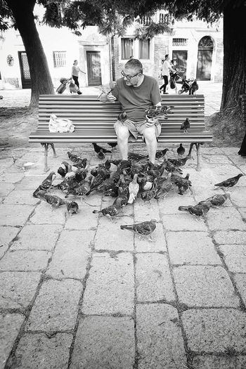 crowding friends One Person Sitting Pigeon Pigeons Pigeon Bird  Bench Town Square Venezia Venice Venice, Italy Flock Of Birds Feeding The Birds Feeding  Solitude EyeEm Best Shots - Black + White Streetphotography Street Photography Streetphoto_bw Blackandwhite Black And White Black & White Blackandwhite Photography Black And White Photography