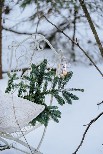 Close-up of tree branch during winter