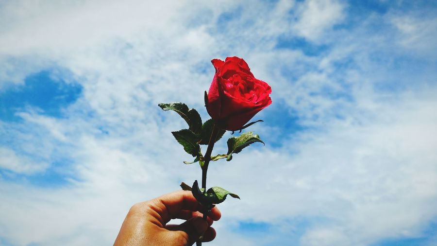 Cropped hand holding red rose against sky