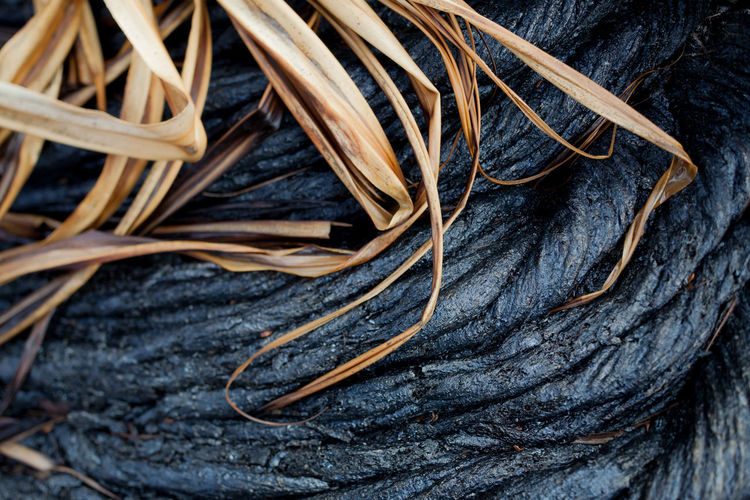Desiccated Palm Leaf on Lava CIRCLE Of LIFE Dark Death Life Peace SURRENDER Art Beauty In Nature Braid Braided Close-up Complexity Desiccated Full Frame Haptic Interdependence Intertwined Interwoven Lava Nature No People Pahoehoe Plant Still Life Wood - Material