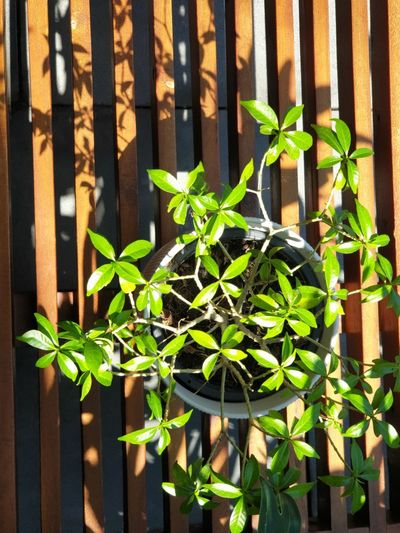 Close-up of potted plant by metal fence