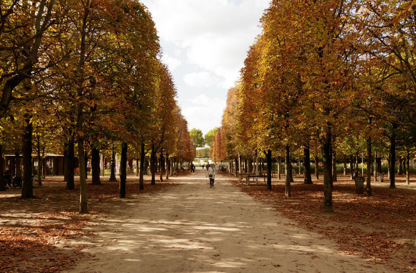 If Trees Could Speak Iftreescouldspeak France Paris ❤ Autumn Beauty In Nature Change Day Leaf Nature No People Outdoors Scenics Sky The Way Forward Tourist Destination Travel Destinations Tree