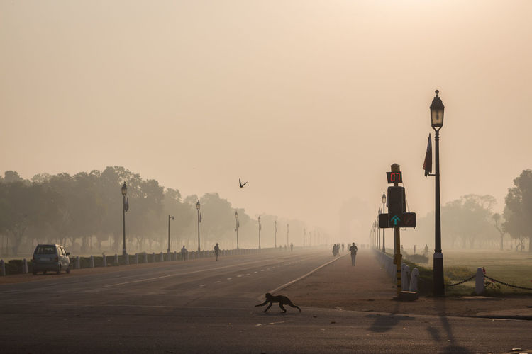 monkey run across the road in rajpath, New Delhi, India Day Delhi India Indiapictures Landmark Landscape Monkey Outdoors Rajpath Road Scenics Sight Sky Street Light Street Photography Street Shot Wallpaper Weather Wildlife