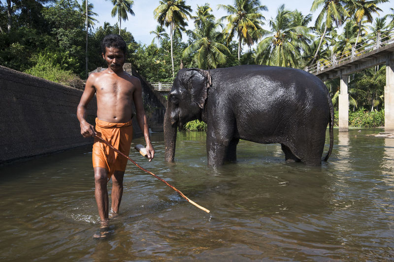 Adults Only Animal Trunk Bath Beauty In Nature Caretaker Elephant Full Length Indian Elephant Kanyakumari Men Muscular Build Nature One Man Only One Person Only Men River Shirtless Standing Thirparappu Falls Tourism Travel Tree Vacations Water Wet Welcome To Black