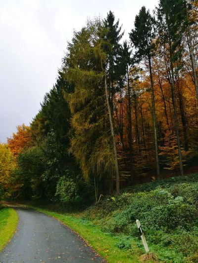 Tree Nature Growth No People Outdoors Beauty In Nature Forest Street Colorful Leafes Trees Moody Badweather