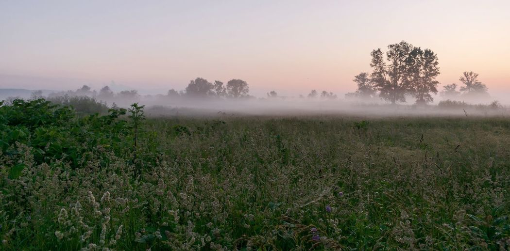"""""""Enjoy the Silence"""" EyeEm Selects Plant Beauty In Nature Growth Sky Environment My Best Photo Nature Field Land Landscape Fog No People Tranquil Scene Tree Tranquility Scenics - Nature Rural Scene Outdoors Non-urban Scene"""