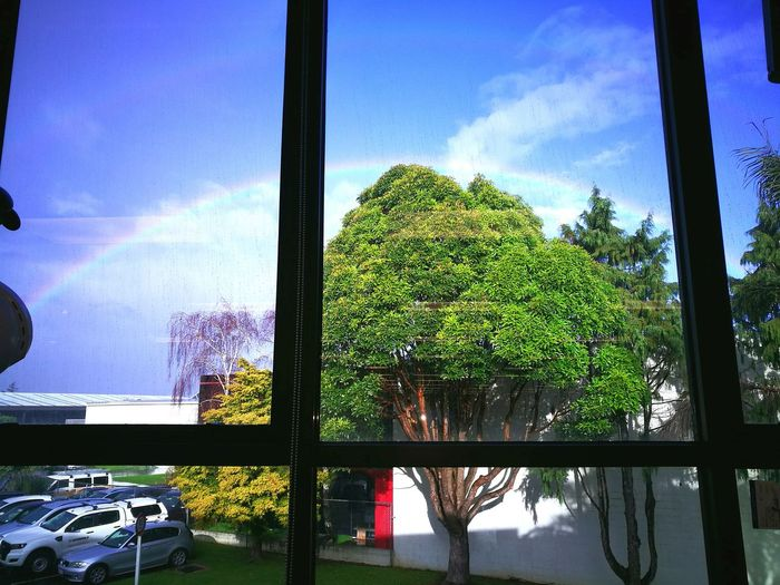 Onehunga Newzealandscenary Tree Sky Cloud - Sky Window Day Nature Rainbow🌈 BlessedBeyondMeasure Workplace View Water