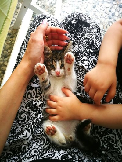 Home Kitten Child Hands Mom And Daughter Mom And Baby Togheterness Family Parents Parenting Animal Love Baby And Cat Three Hands Human Hand Child Childhood Togetherness High Angle View Close-up Personal Perspective Moms & Dads