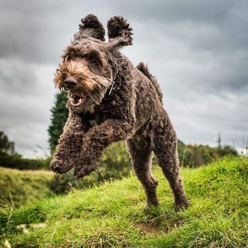 Dog Jumping Dog