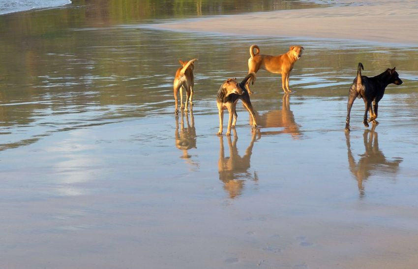 Morning gathering on the beach of Dickwella, Sri Lanka Animal Beach Photography Dogs Dogslife Reflection Reflections In The Water Water Wild Dogs Dogs On The Beach