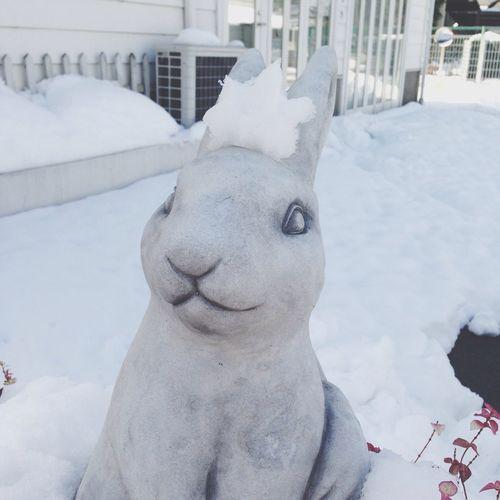 Rabbit Snow Winter