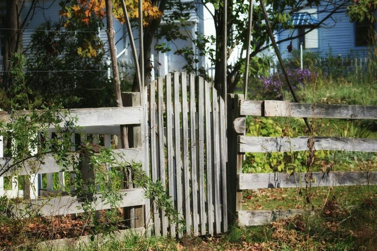 Gate Wooden Fence Tree Building Exterior Outdoors Tranquil Scene Nature Beauty In Nature Plant Green Color Tree Trunk Tranquility Non-urban Scene Scenics No People Day Built Structure Branch Growing Growth Nature_collection Autumn Season