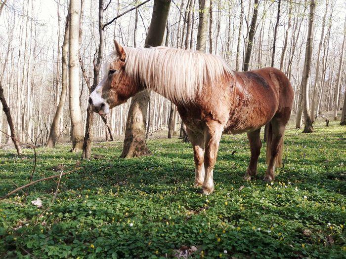 Tree Standing Field Full Length Animal Themes Grass Livestock Pony Horse
