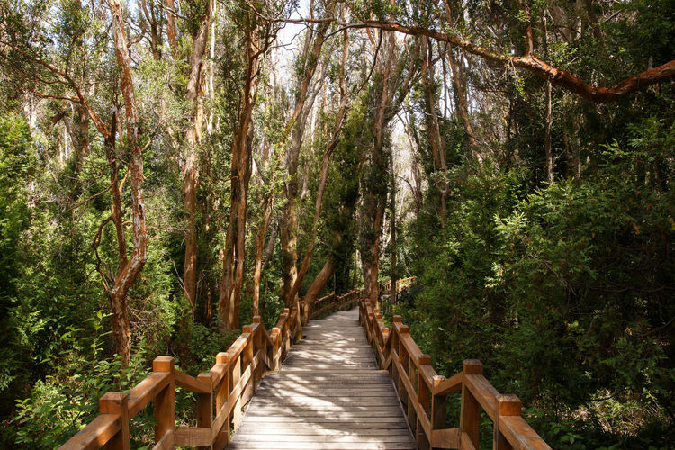 Arrayan Arrayanes Bamboo Grove Day Eco Tourism Forest Lush - Description Nature No People Outdoors Summer Timber Timberland Tranquility Tree Tree Trees Turism Vacations Villa La Angostura Wood WoodLand