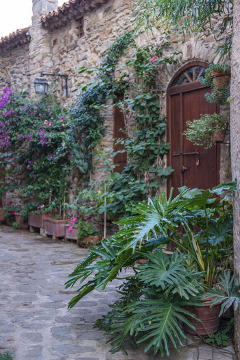 beautiful street of Castellabate with plannts Architecture Building Exterior Built Structure Castellabate Growth Italy Nature No People Outdoors Plant Street Town
