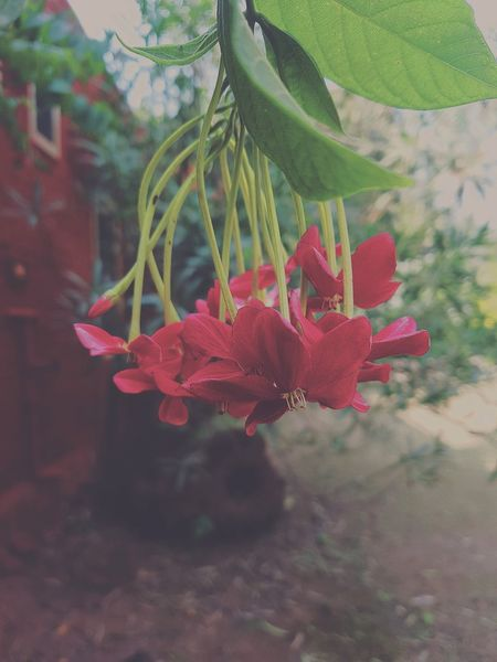 Red Growth Plant Nature No People Day Beauty In Nature Outdoors Close-up Tree Fragility