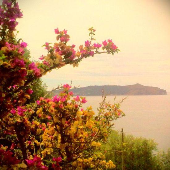 Pisciotta Italy Flowerpower Sea