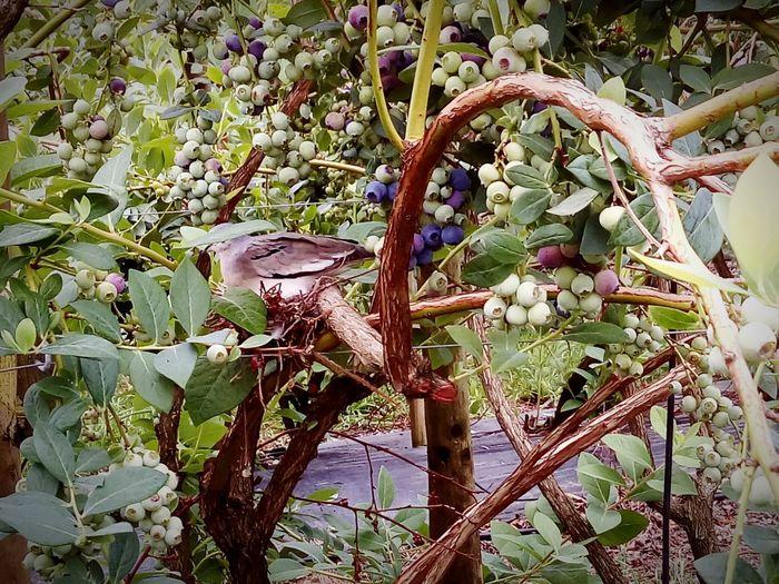 Cranberries Birdie Branch Blooming Growing Fragility