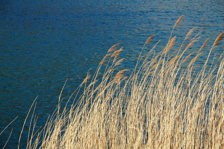 Close-up of grass with sea in background