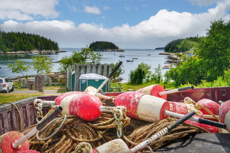 Harbor Lobster