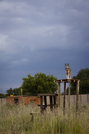 Low angle view of dog on standing on man made structure against sky