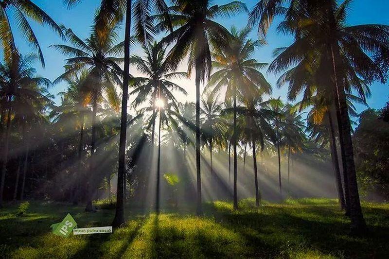 My Village Landscape #Nature #photography EyeEm Nature Lover Imranputrasasakgalery Landscape_lombok