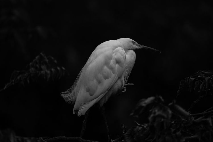 Bird Animal Blackandwhite Black And White Cool Amazing Nature No People Animal Wildlife Animals In The Wild Animal Themes