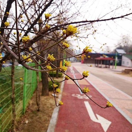 봄이왔네 봄 아직춥네