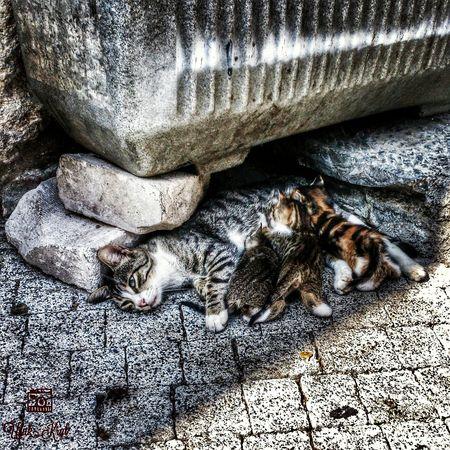 Kedi Animals Kedi Aşkı Merhamet