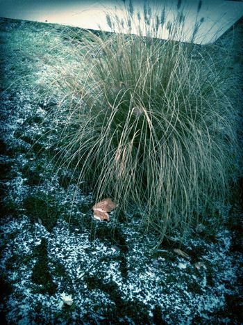 Winter in France Winter