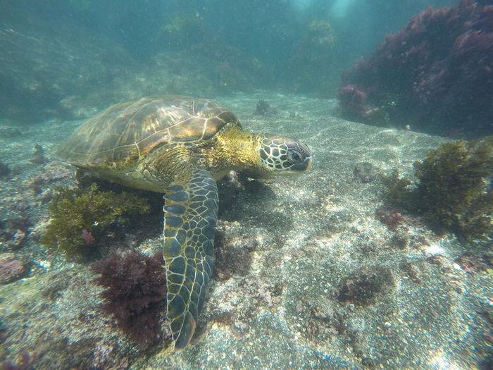 Sea turtle Turtle Snorkeling UnderSea Underwater Sea Nature No People Sea Life Day