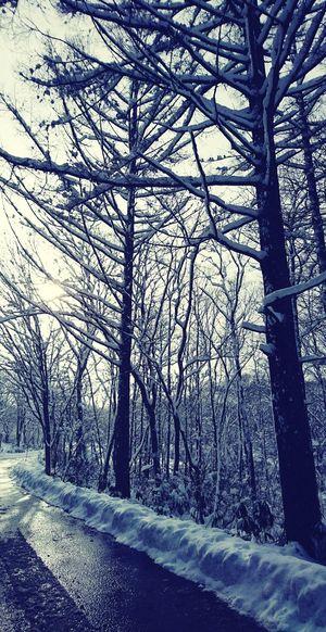冬の戸隠 戸隠 冬 Tree Snow Bare Tree Winter Cold Temperature Forest Tree Trunk Sky Close-up