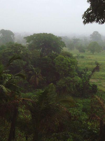Bosque Clima♠