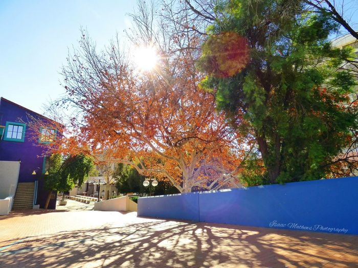 Autumn Beauty. Popular Photos Photography Relaxing Moments Autumn Colors Tucson Arizona  Fallcolors Trees Light Sunrays Brickpathways Downtown Calm Orange