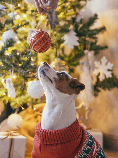 Close-up of a dog on christmas tree