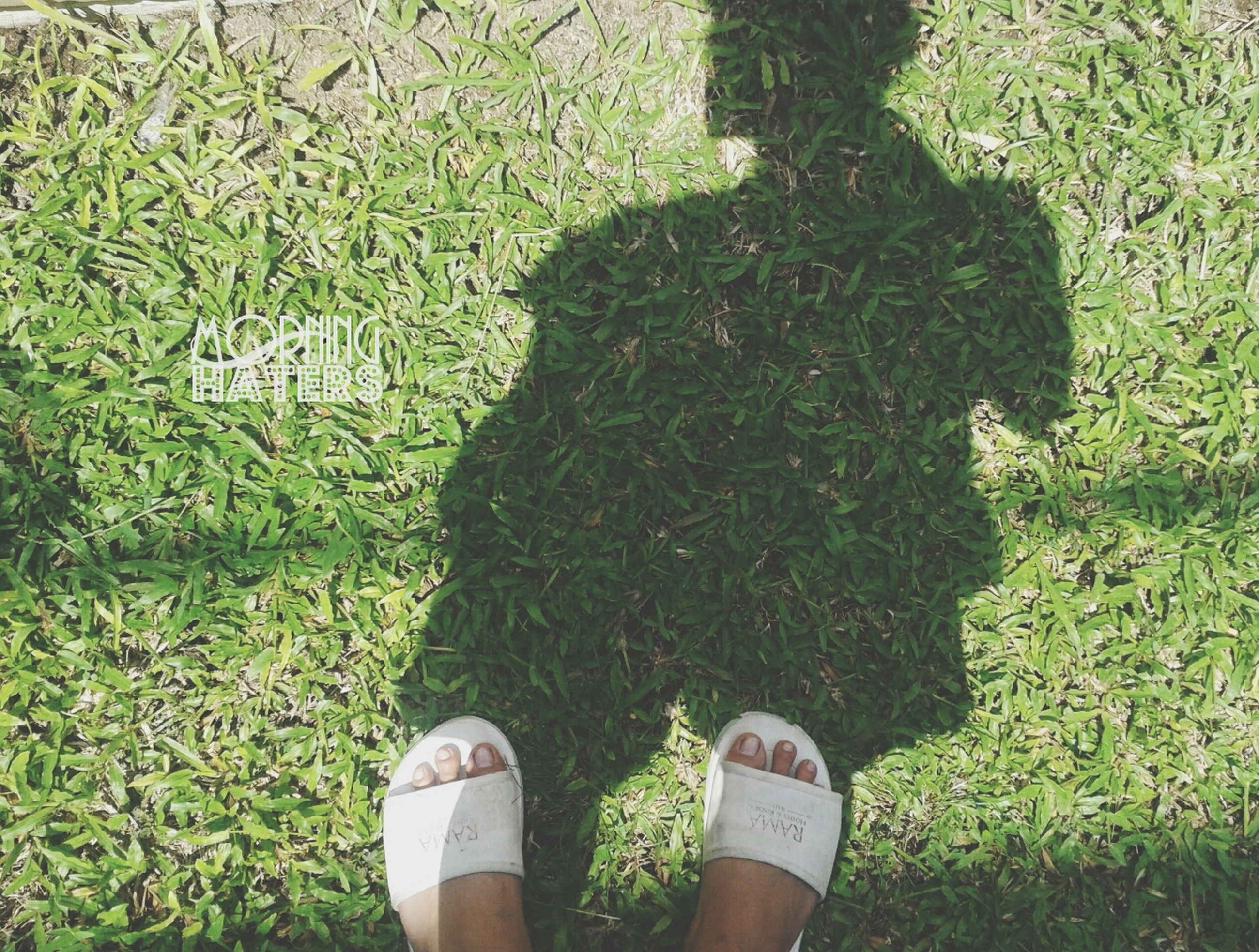 low section, grass, person, standing, lifestyles, grassy, field, shoe, leisure activity, personal perspective, unrecognizable person, human foot, men, growth, green color, high angle view, plant