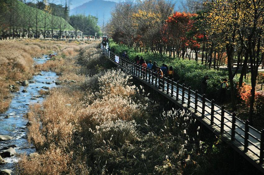 Munkyung Autumn Colors Autumn Foliage Autumn Munkyungsaejae South Korea Korea Stream