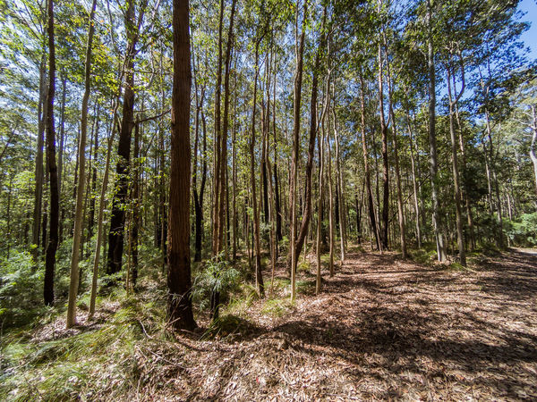 Australian bush / forest along the south-eastern coastline. Fern and eucalyptus trees. Australia Australian Bush Australian Landscape Beauty In Nature Day Fern Forest Green Color Growth Landscapes Lush - Description Nature No People Outdoors Scenics Tranquil Scene Tranquility Tree Tree Trunk